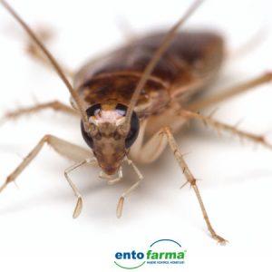 kalorifer-bocegi-kakalak-ilaclama-böcek